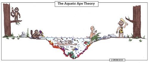Aquatic-Ape-Theory.jpg